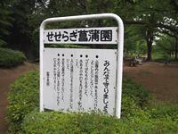 山崎公園(せせらぎ菖蒲園)