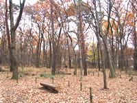 森のさんぽ道